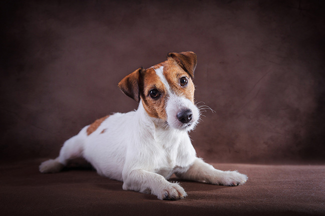 Tips for Getting the Best Cheap Canvas Prints of Your Pets