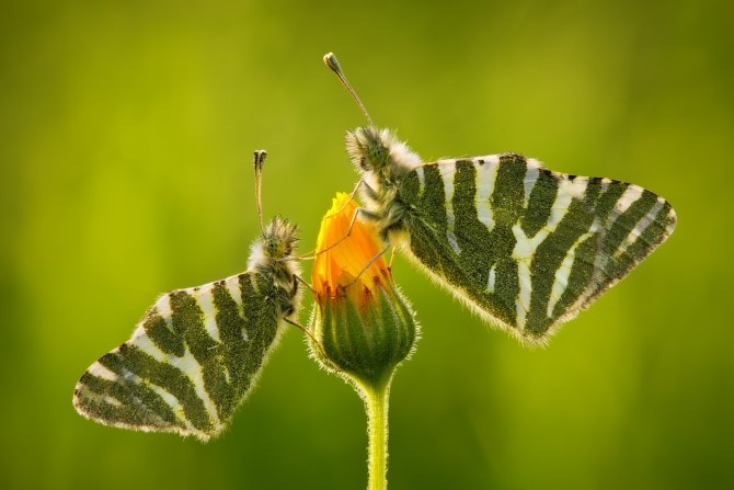 Macro Photography Tips - Butterflies