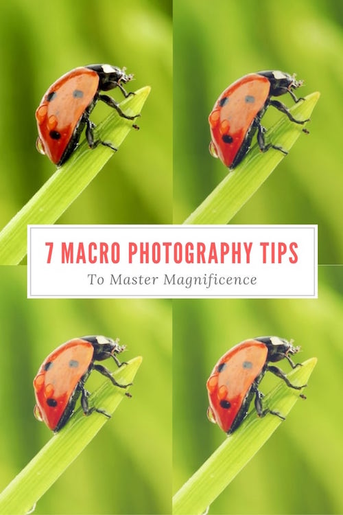 7 Macro Photography Tips To Master Magnificence