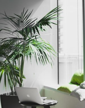 office decorating ideas greenery