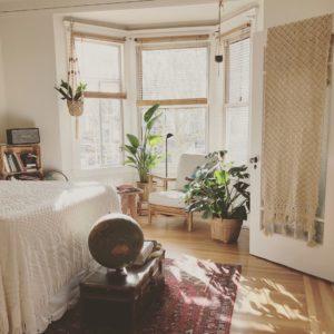 indoor plants interiors trends