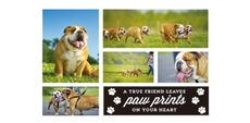 Themed Collage Photos - Pets